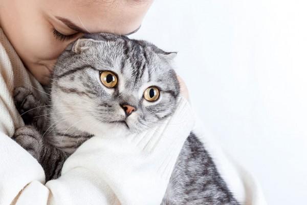 Tiere-unter-Stress
