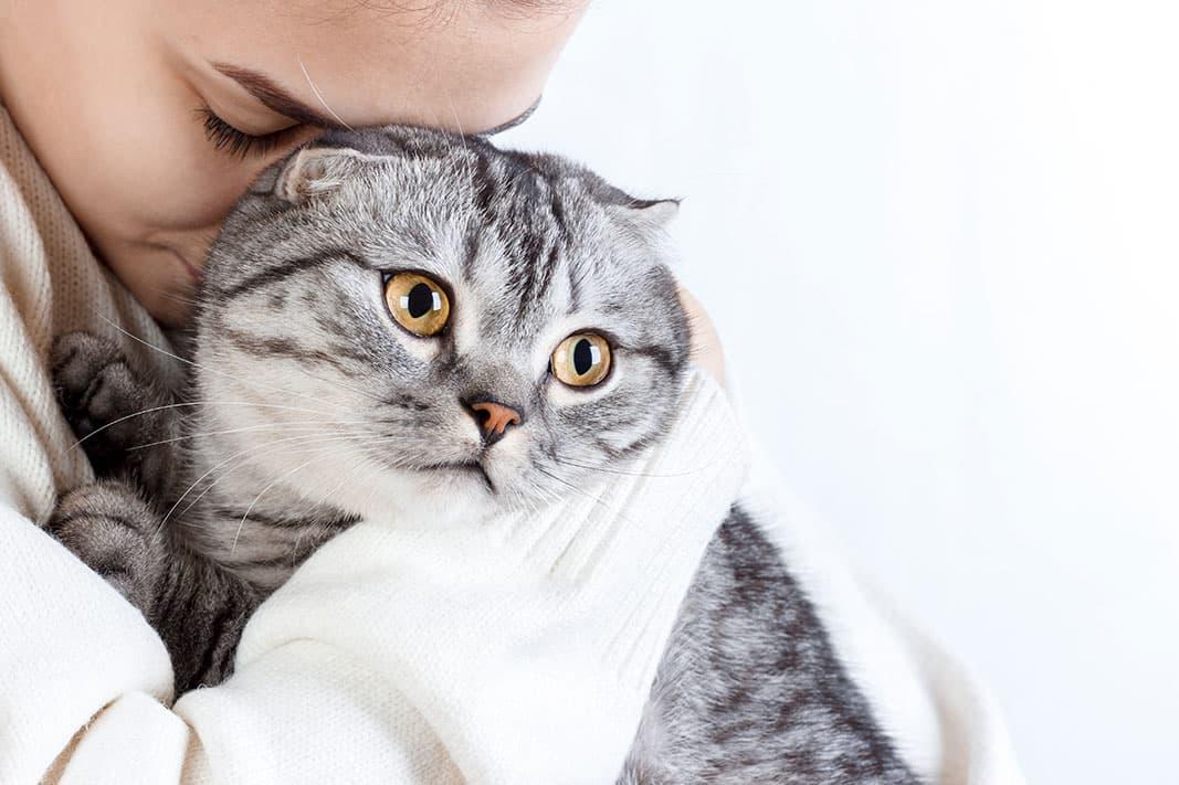 Können Tiere unter Stress leiden?